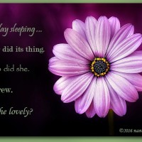 As She Lay Sleeping …